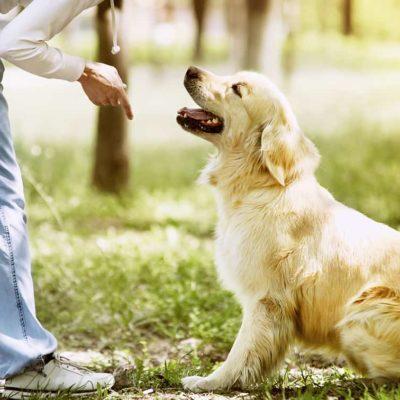 master-en-adiestramiento-de-perros-para-el-salvamento-y-rescate-de-victimas
