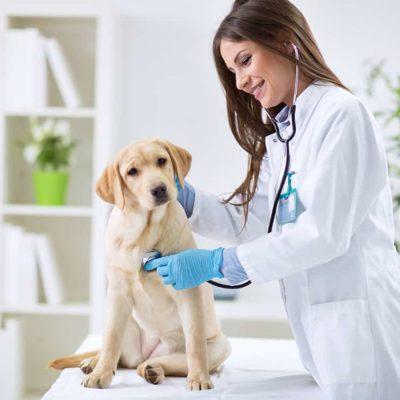 master-en-auxiliar-de-tecnico-de-veterinario