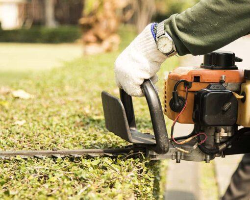 master-en-instalacion-y-mantenimiento-artesanal-de-jardines