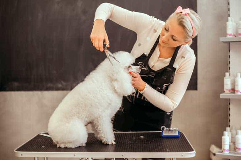 Peluquería canina, una profesión en pleno auge