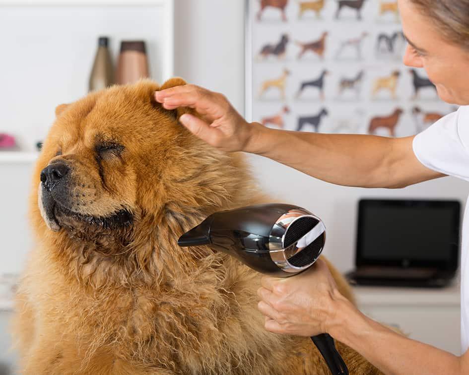 Atractivo Anatomía Canina Virtuales Imagen - Imágenes de Anatomía ...